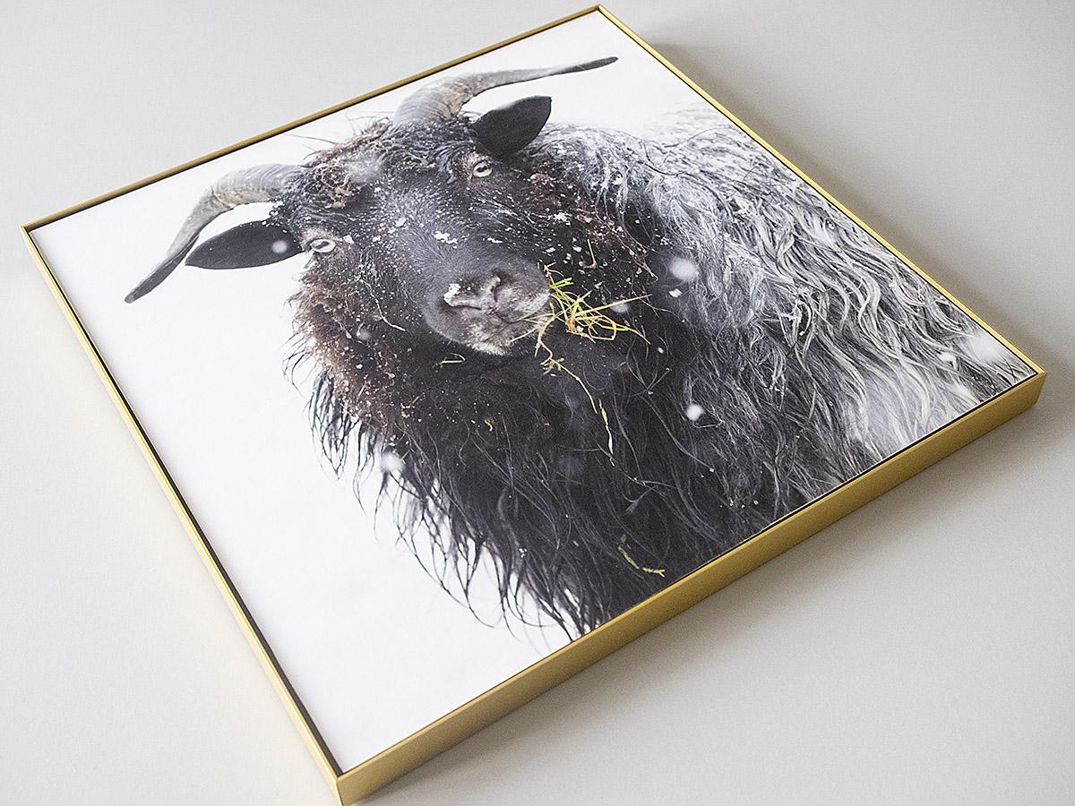 Will Magazine Leserhop | Rahmen-Set 30 x 30 cm, »Gold« | online kaufen